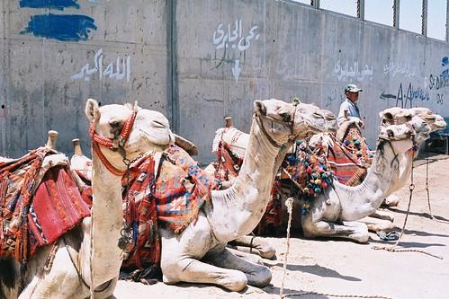 Egypt D8-023