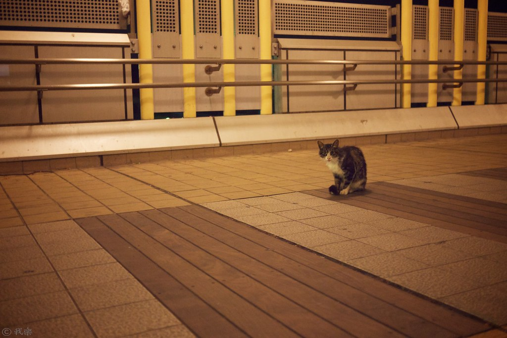 Cat in midnight #1