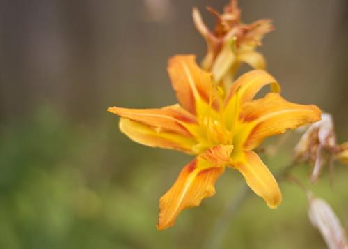 lily sunshine