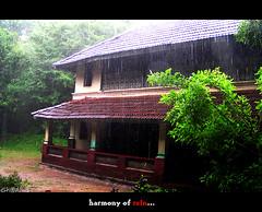 Harmony of rain (Sh@dows) Tags: rain june olympus kerala raining 2007 thrissur mansoon sarin mazha sarinsoman keralarain keralamonsoon pathayapura kanjiratharaveedu mazhakalam