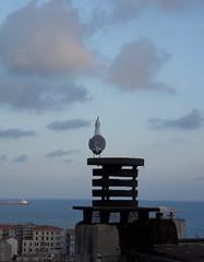 Vicino di casa (fotomie2009) Tags: roof bird fauna mediterraneo seagull gabbiano reale larus chimneypot larusmichahellis michahellis gabbianoreale gabbianorealezampegialle zampegialle