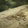 discarded (jssteak) Tags: macro pine forest square dead log woods pineneedles longlake filtered deepforest indianpeakswilderness lakeisabelle diamondclassphotographer flickrdiamond naturewatcher textued texturesquared