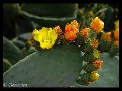 Good things are always the hardest ... (DomenicoM82) Tags: autumn parco del autunno alto calabria gmt nazionale cosenza jonio ionio pollino trebisacce mywinners