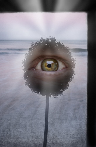 Eye Pluribus