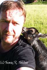 Pygmy goat nibbles on man's ear (travelphotographer2003) Tags: usa ecology kid spring westvirginia pygmygoat livestock freshness refreshment appalachianmountains purity tranquilscene alleghenymountains familyfarm animalhusbandry webstercounty thomasrfletcher