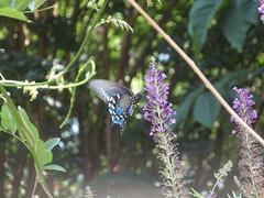 butterfly feeding (2)