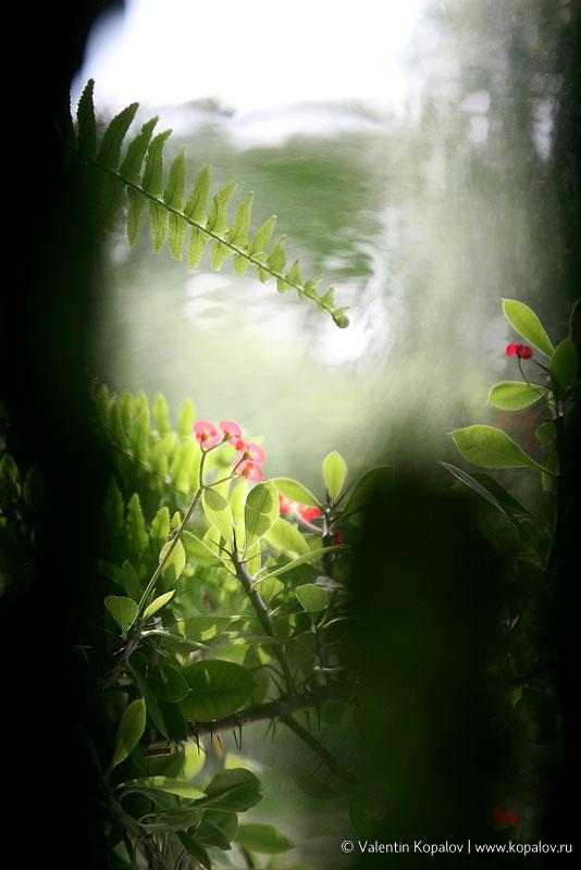 2010 - фото flower1