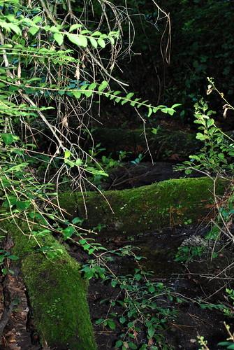 mossy logs 2