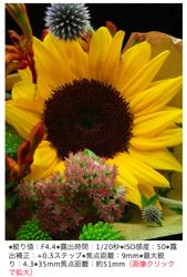 Pentax W60 flower photo