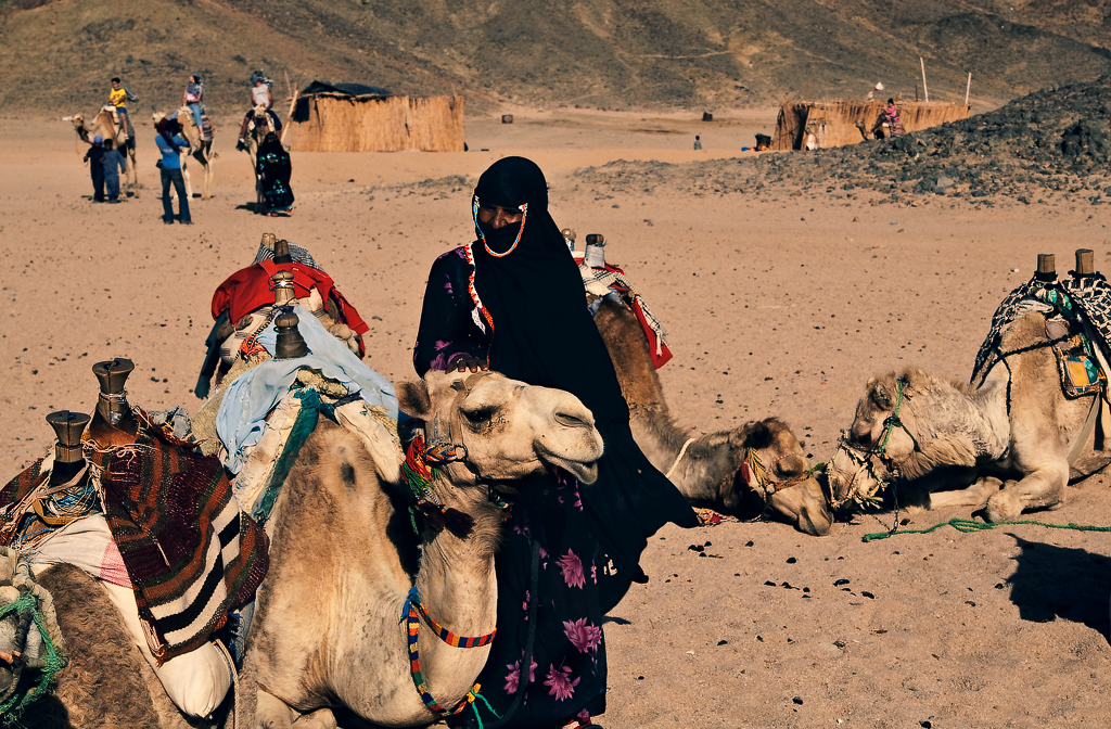 camels at bedouin's willage