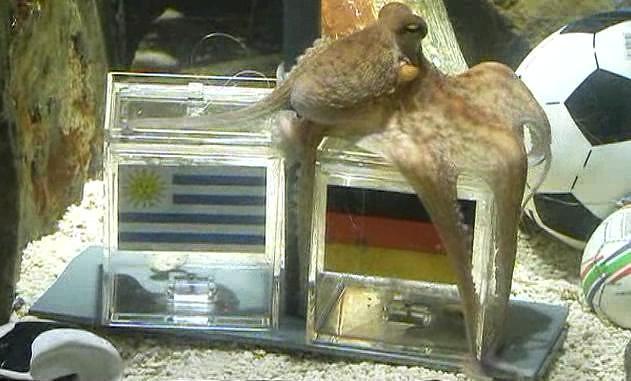 Pulpo Paul Uruguay Alemania