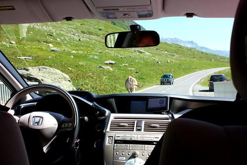 Gipfeltreffen_Elektro-Benzin und Paarhufer