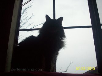 silueta gato