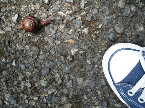 olympia_snail