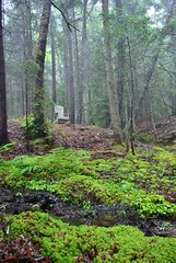 Foggy Forest (CasualCapture) Tags: morning trees june fog forest moss chair woods nikon stream maine d60