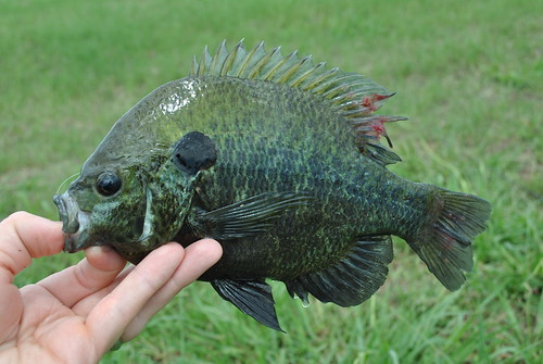 fish 027