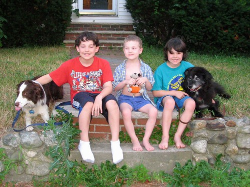 0573 Henry boys and dogs
