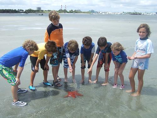sandbar starfish