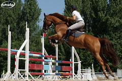 DSC02595-s (Myprofe) Tags: madrid horse sport club caballo deporte salto countryclub equestrian horsejumping actionsequence hipica concursodesaltos ccvm madridcountryclub