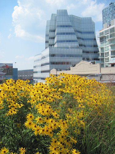 Gehry and Yellow Flowers