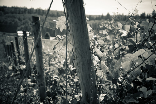 Vintage Vineyard Look