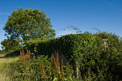 Pillbox lost to nature - Beer (Alastair Cummins) Tags: beer overgrown field grass lost bush nikon ivy ww2 1855mm waste defence d40 naturepillbox