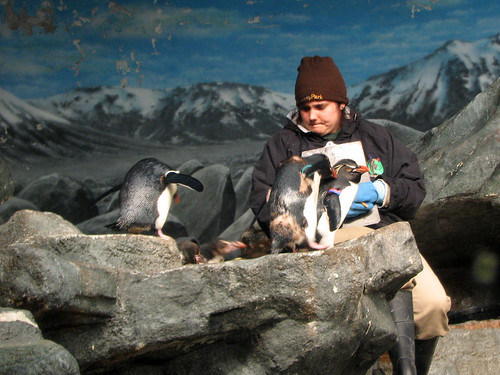 Kovler Penguin and Seabird House