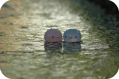 We like it in the rain (itslour) Tags: cute wet water smile rain toy happy japanese drops doll kawaii manju onsenmanjukun