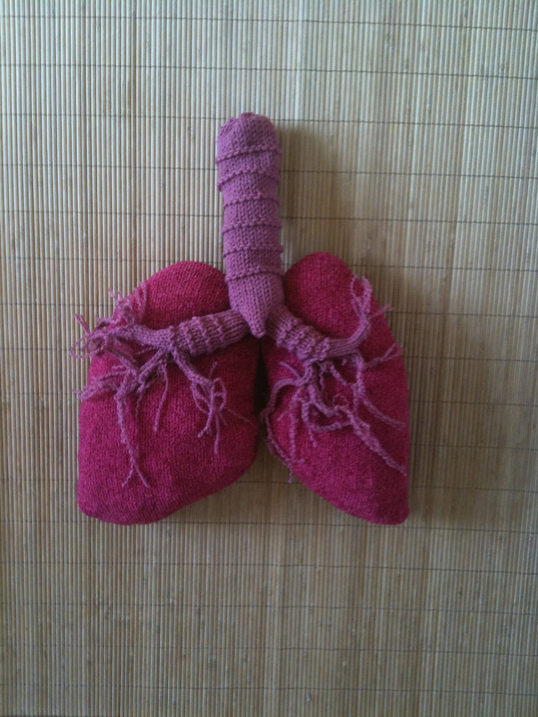 Respiratory system, if it were made of acrylic!