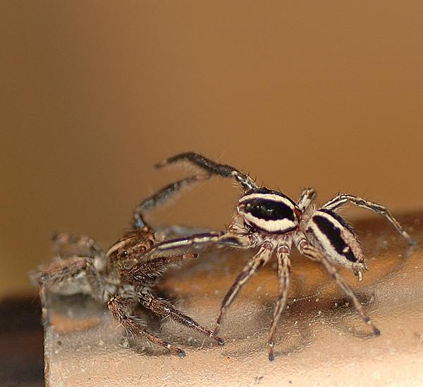 クモ喧嘩中