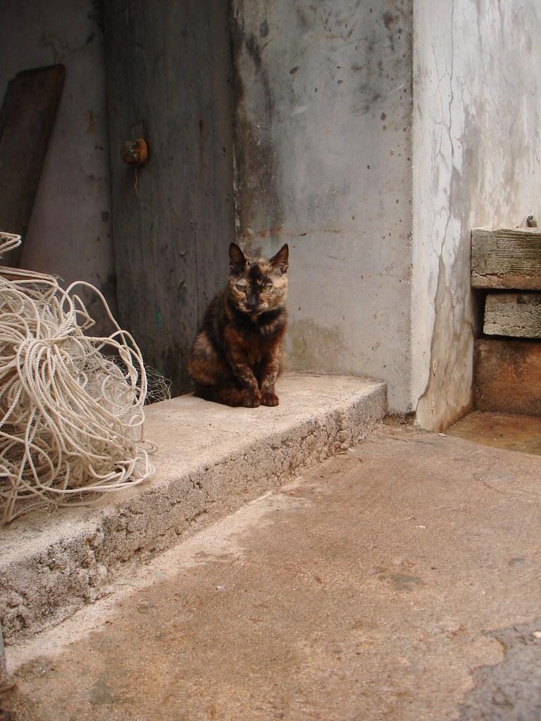 在望安花宅,小貓就就補漁網的伯伯家門口安靜地待著。