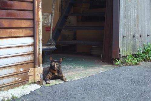 Today's Cat@2010-07-23