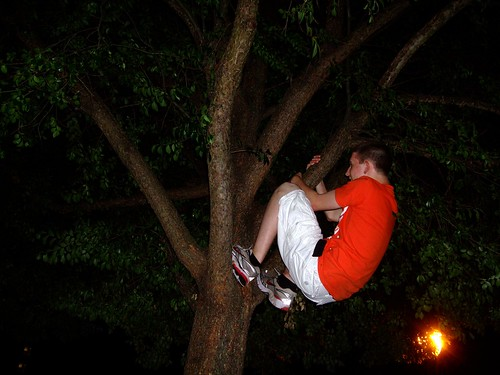 treehugger