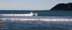 Wellington (C) 2010