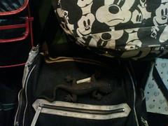 เจอตัวนึ้บนกระเป๋าในร้านกระเป๋า ที่สวนจตุจักร