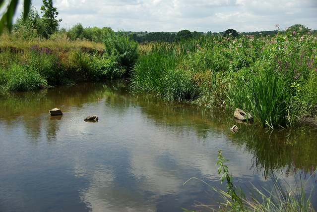 The River Roding