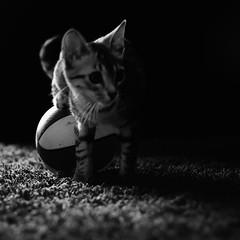 Kitty (Color-de-la-vida) Tags: cat chat kitty gato gat colordelavida