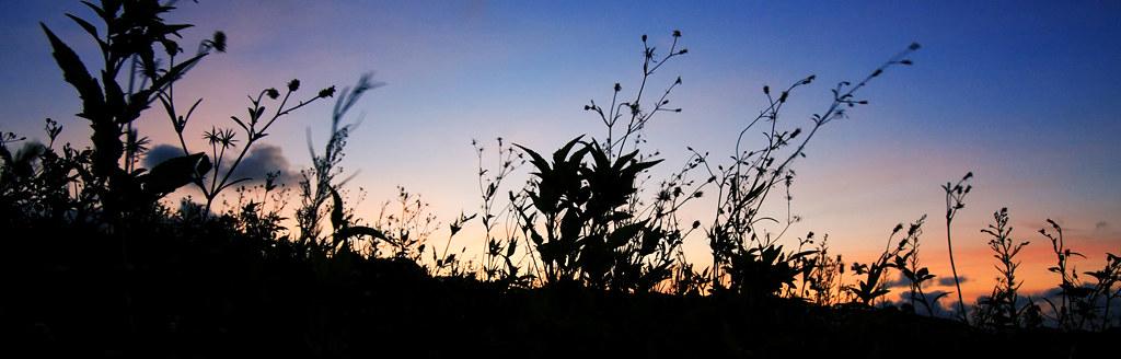 尋找願望風車 - 遠遠地看著她