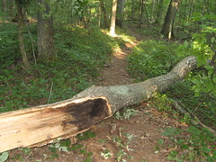 Tree across the trail