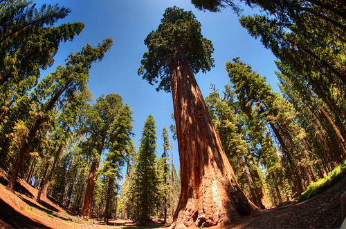 Sequoia National Park 10