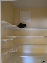 Before the stuff arrived, a scene with cat (redfox) Tags: house santabarbara cat moving nemo pantry