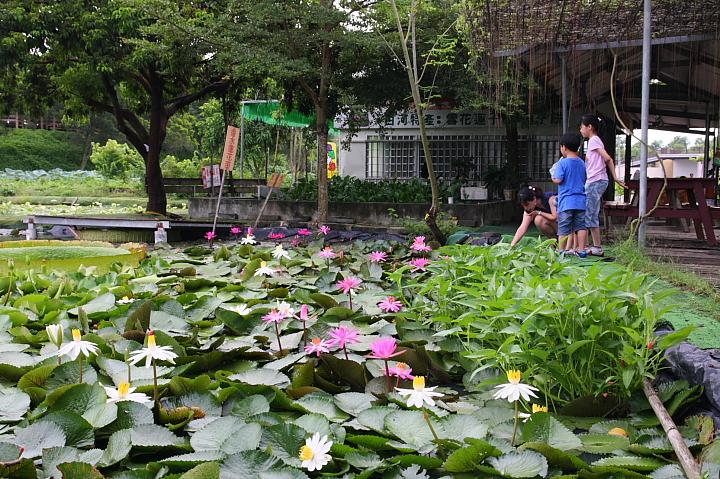 台南白河蓮花公園(水連公園)0031