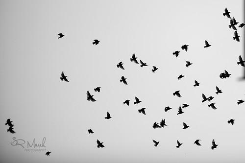 birdsrsrs