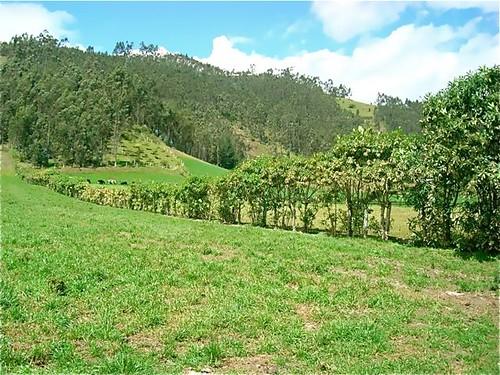 ecuador-dairy-farm