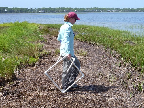 Emily walks over seagrass wrack