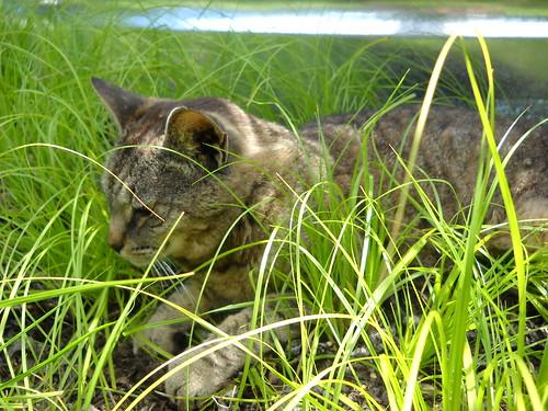 Longwood July 2010 005
