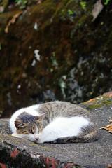 IMG_0507 () Tags: taiwan taipei    taipeicounty   houtong    catvillage rueifangtownship houtongcatstreet