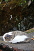 IMG_0507 (翔志) Tags: taiwan taipei 台灣 台北 貓 taipeicounty 台北縣 侯硐 houtong 猴硐 瑞芳鎮 貓村 catvillage rueifangtownship houtongcatstreet 百貓街