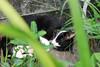 IMG_0493 (翔志) Tags: taiwan taipei 台灣 台北 貓 taipeicounty 台北縣 侯硐 houtong 猴硐 瑞芳鎮 貓村 catvillage rueifangtownship houtongcatstreet 百貓街