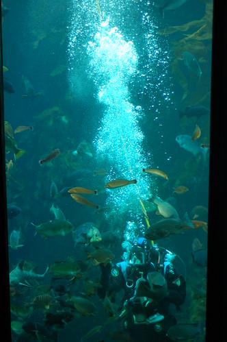Obligatory diver photo